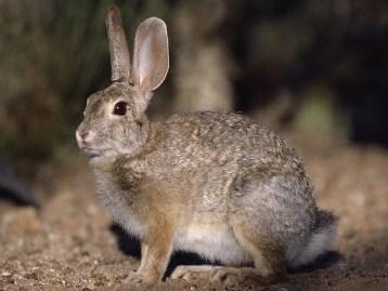охота заяца