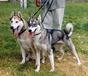 Регистрация охотничьих собак