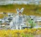 Охота на зайца с подхода без собаки