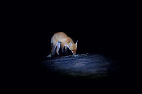 Если вы впервые отправляетесь на ночную охоту, будет не лишним усвоить несколько простых правил, которые способны значительно повысить её эффективност...