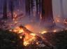 Пожаров в белорусских лесах стало меньше