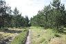 На охоте в Брестской области подстрелили лесника