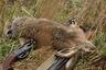 В Беларуси открылся сезон охоты на пушных животных