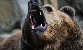 охота медведь