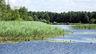 В Беловежской пуще запрещена охота на водоплавающих птиц