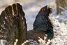 В Мядельском районе охотник «перепутал» бобра с перелетной птицей