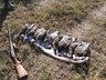 Открывается сезон охоты на водоплавающих птиц в Беларуси