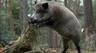 Доходы от охотничьего туризма снижаются