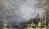 По данным МЧС запрет на посещение лесов установлен в Гомельской области и на территории Оршанского лесхоза....