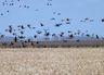 С 14 марта 2020 года открывается весенний сезон охоты на пернатую дичь