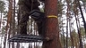 Трстенд,засидка на дереве.Гаффы
