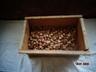 Гильза папковая , капсулированая 12 калибр